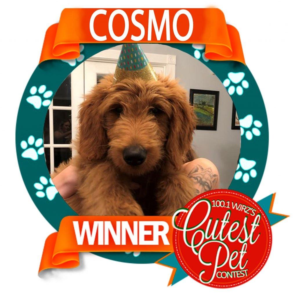 Cutest Pet 2020 Winner - Cosmo