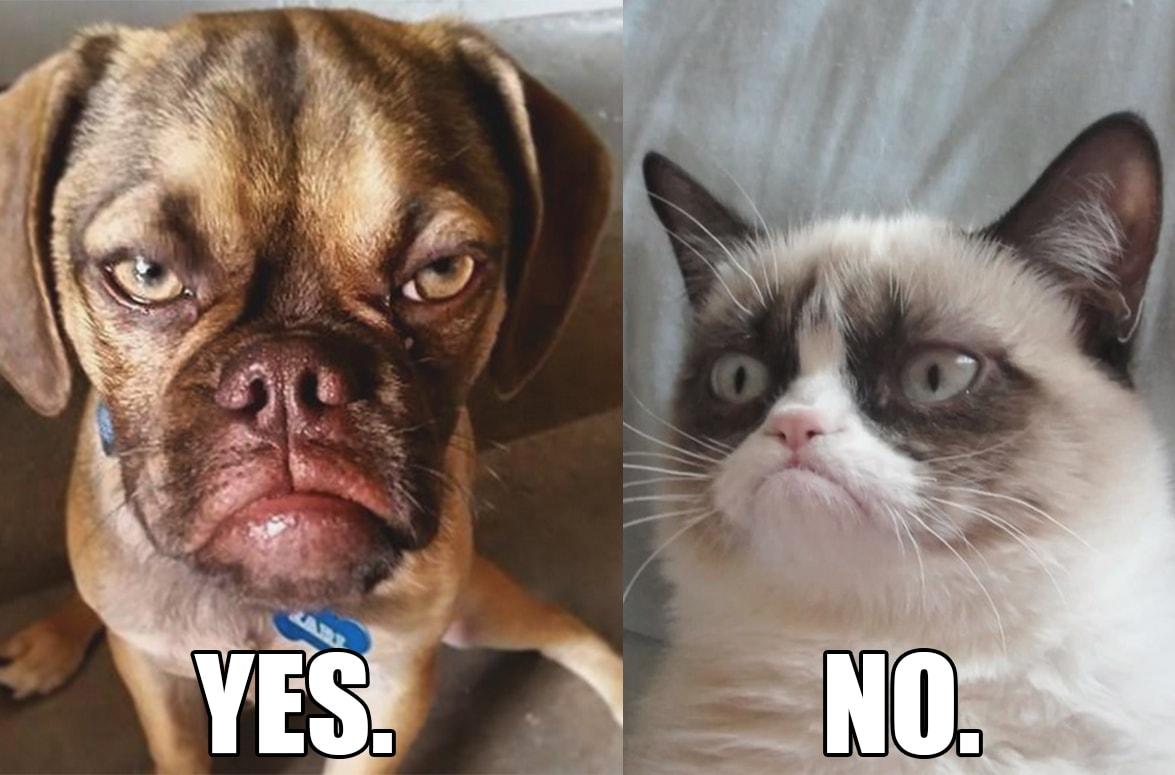 Grumpy Cat King